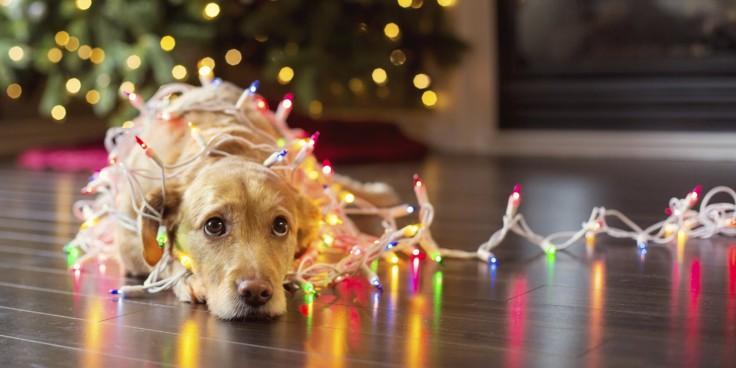 o-sad-christmas-dog-facebook